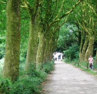 haanwijk s