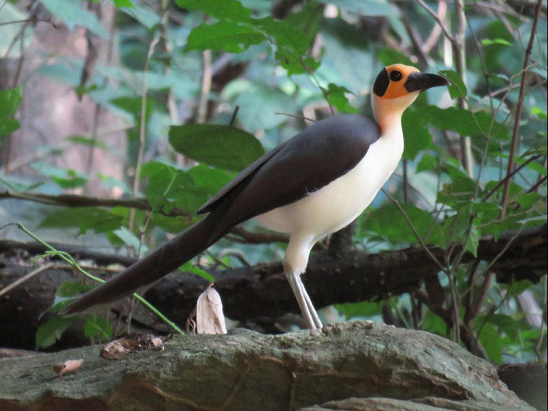 vreemde vogel Arjan